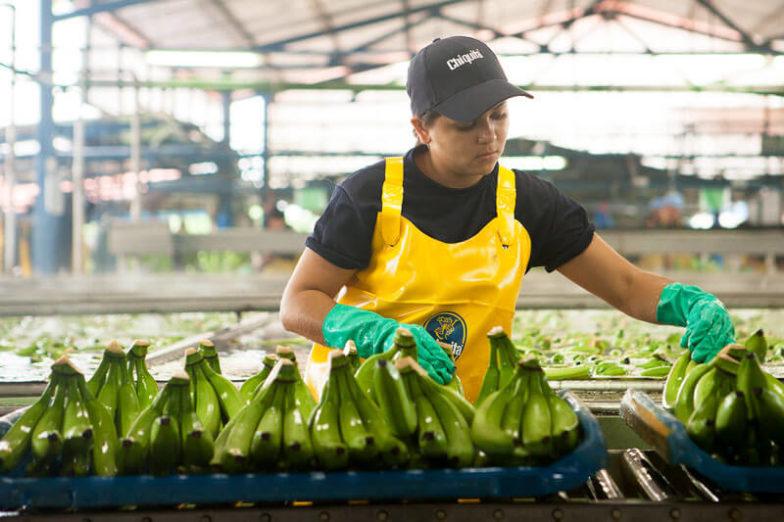 La gestion de l'empreinte hydrique dans les exploitations de Chiquita permet d'économiser 1,8milliard de litres d'eau chaque année - 1