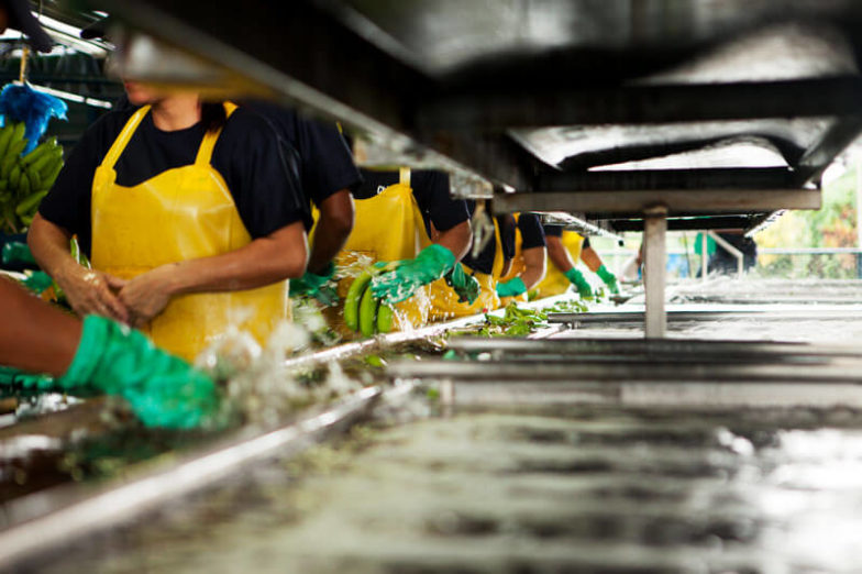 La gestion de l'empreinte hydrique dans les exploitations de Chiquita permet d'économiser 1,8milliard de litres d'eau chaque année - 2