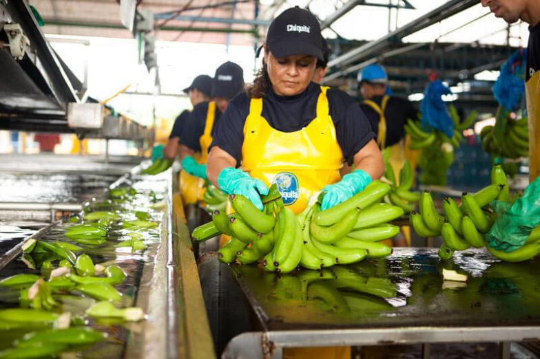 La gestion de l'empreinte hydrique dans les exploitations de Chiquita permet d'économiser 1,8milliard de litres d'eau chaque année - 3
