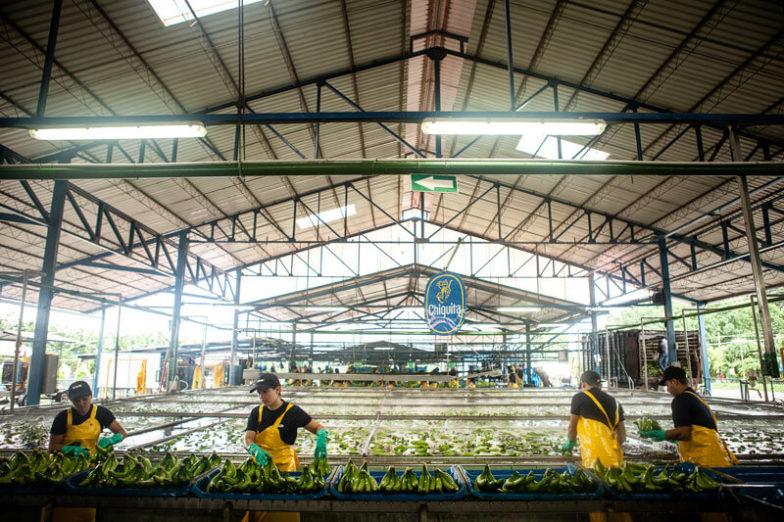 La gestion de l'empreinte hydrique dans les exploitations de Chiquita permet d'économiser 1,8milliard de litres d'eau chaque année - 4