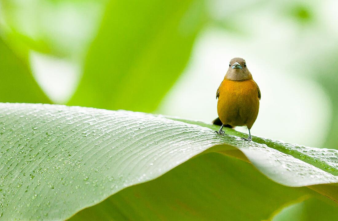 Biodiversité et comment Chiquita ouvre la voie