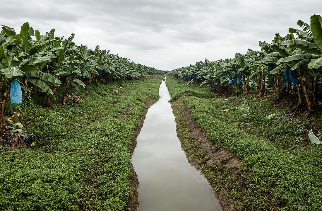 Les trois piliers de l'approche de Chiquita pour aborder la durabilité et la biodiversité: