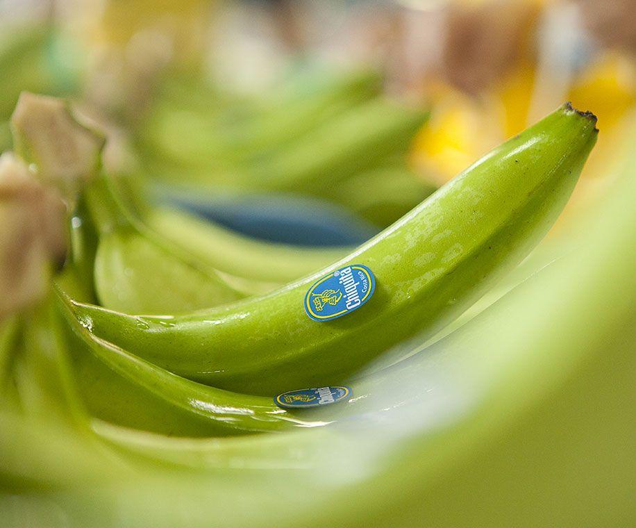 Marque de bananes Chiquita, développement durable