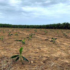 Notre engagement pour l'agriculture durable
