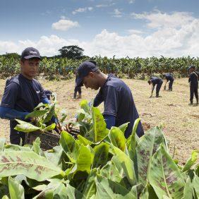 Chiquita maintient la continuité dans sa mission d'agriculture durable